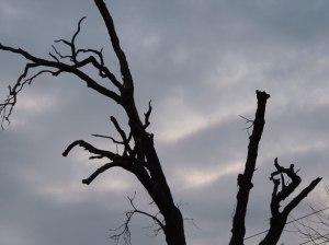 creepy-barren-tree[1]